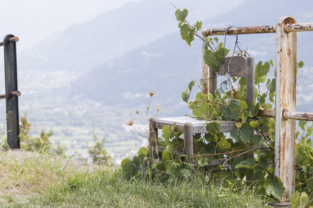 Desolation concept, abandoned chair in nature full of climbing plants composition Stock Photo