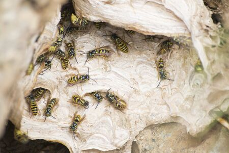 Wasps nest full of wasps composition