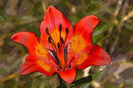 Red and orange flower illustration