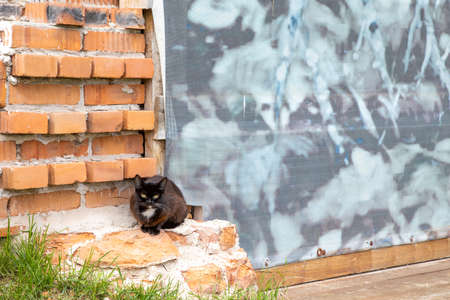 black cat sitting on a red brick wall