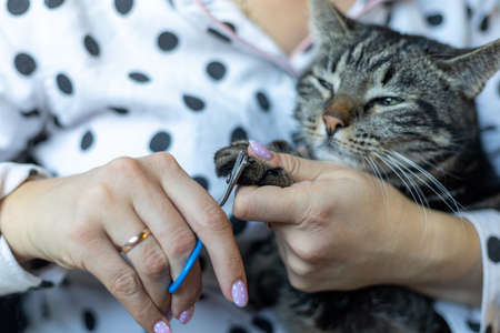 Woman cutting claws of gray cat