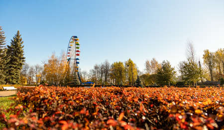 Ferris wheel against a background of red leaves and a blue sky with the sun. It's autumn 免版税图像