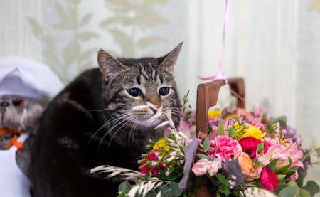 gray cat gnaws flowers from a bouquet 免版税图像
