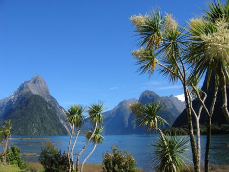 Palmtrees at Milford Sound, New Zealand Stock Photo