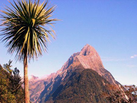 Palmtree at Milford Sound, New Zealand Banco de Imagens