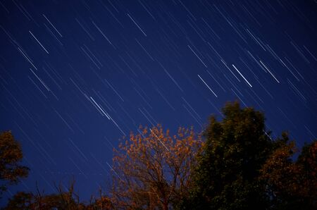Star Trails above the Trees Stock Photo