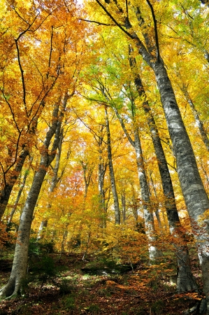 trees with roots: Trees with yellow leaves in autumn Stock Photo