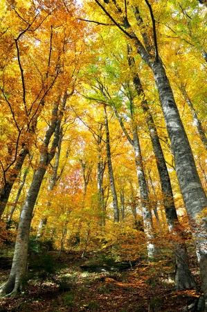 Bäume mit gelben Blätter im Herbst