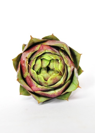 Front view of a raw artichoke isolated on white photo