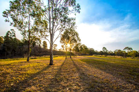sun setting in the bushland within the Western Sydney Regional Parklands 版權商用圖片