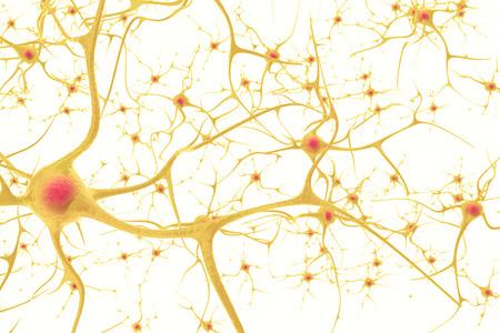 Neurone im menschlichen Nervensystem mit dem Effekt der Tiefenschärfe. 3D-Darstellung auf weißem Hintergrund