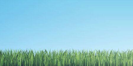 grass border: Green grass border on blue sky background, 3d illustration Stock Photo