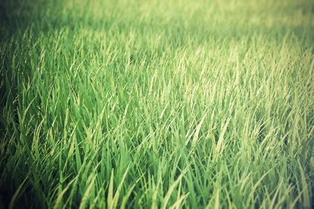 depth of field: Close up of fresh thick grass with depth field effect, 3d illustration