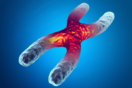 human chromosomes: X chromosome, red in the center, the concept of infection, mutation of the disease. 3d illustration Stock Photo