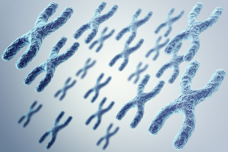human chromosomes: X-chromosomes on grey background, scientific and biology concept. 3d illustration