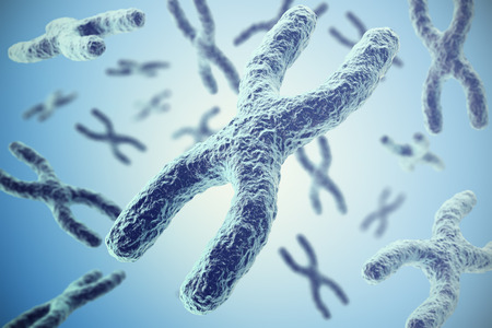 human chromosomes: Chromosomes on blue background, scientific concept 3d illustration Stock Photo