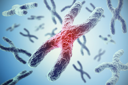 heredity: Chromosomes on blue background, scientific concept 3d illustration Stock Photo