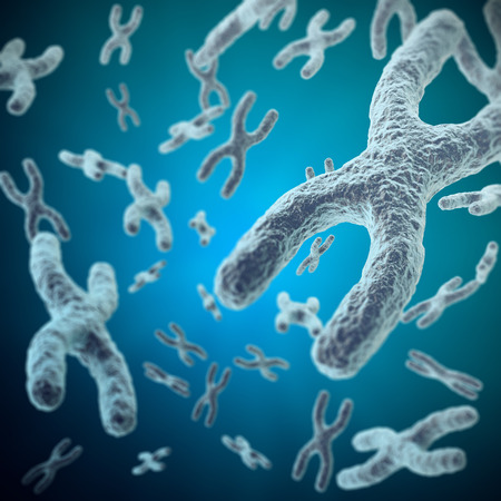 human chromosomes: X-chromosomes as a concept for a human biology as a medical symbol for gene therapy or microbiology genetics research. 3d illustration