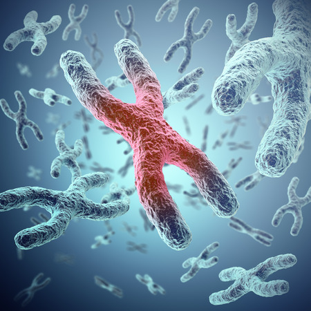 human chromosomes: X chromosome, red in the center, the concept of infection, mutation, disease, with focus effect. 3d illustration Stock Photo