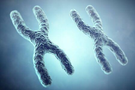 sex chromosomes: XX Chromosome concept. Female Heterogametic Sex. 3d illustration