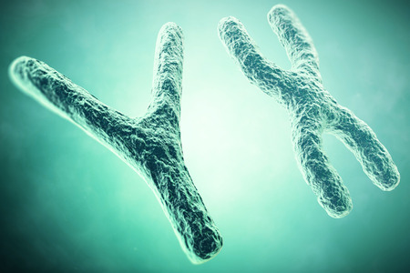 chromosome x y: Y Chromosome in the foreground, a scientific concept. 3d illustration.