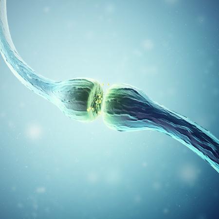 microbiologia: Synapse y células neurona emisora ??señales químicas eléctricos. Las 3D. Foto de archivo