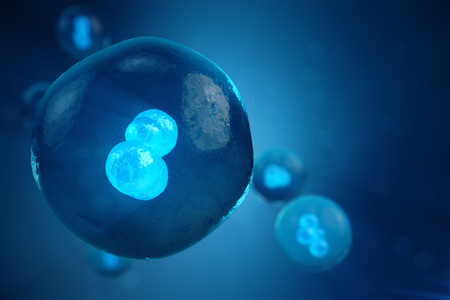 3D illustration Early stage embryo, Stem cell research, Morula. Human or animal cells. Medicine scientific concept. Banco de Imagens