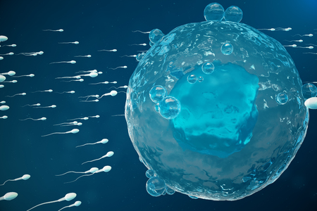 Sperm and egg cell, ovum. Native and natural fertilization - close-up view. Conception the beginning of a new life. Medical concept 3D illustration Banco de Imagens