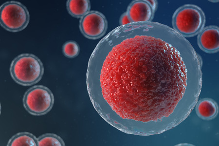 3D illustration egg cells embryo. Embryo cells with red nucleus in center. Human or animal egg cells. Medicine scientific concept. Development living organism at the cellular level under microscope.