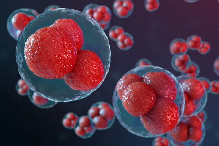 3D illustration egg cells embryo. Embryo cells with red nucleuses in center. Human or animal egg cells. Medicine scientific concept. Development living organism at the cellular level under microscope.