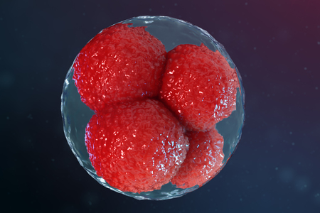 3D illustration egg cells embryo. Embryo cells with red nucleuses in center. Human or animal egg cells. Medicine scientific concept. Development living organism at the cellular level under microscope. Stock Illustration - 120805151