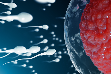 3D illustration sperm and egg cell, ovum. Sperm approaching egg cell. Native and natural fertilization. Conception the beginning of a new life. Ovum with red core under the microscope, movement sperm