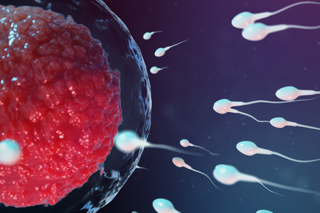 3D illustration sperm and egg cell, ovum. Sperm approaching egg cell. Native and natural fertilization. Conception the beginning of a new life. Ovum with red core under the microscope, movement sperm Stock Photo