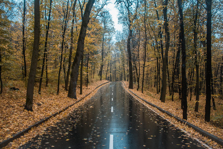 Smooth glossy road in the middle of the autumn park