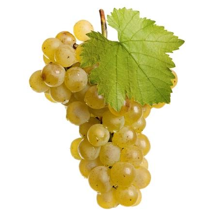 Manojo fresco de vino blanco sobre un fondo blanco