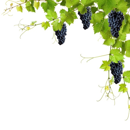Collage of vine leaves and blue grapes on white background photo