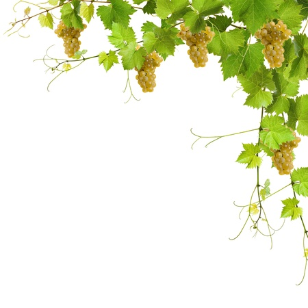 Collage of vine leaves and yellow grapes on white background photo