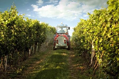 Tractor en el vi�edo fumigaci�n t�xica de protecci�n