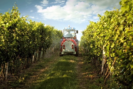 tow tractor: Tractor in the vineyard spraying toxic protection  Stock Photo