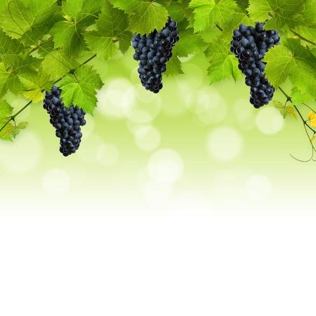 Collage de feuilles de vigne et des raisins bleus sur fond blanc