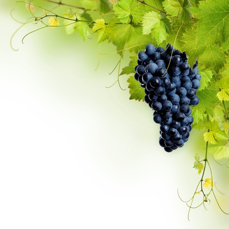 detail of bunch: Collage of vine leaves and blue grape on white background