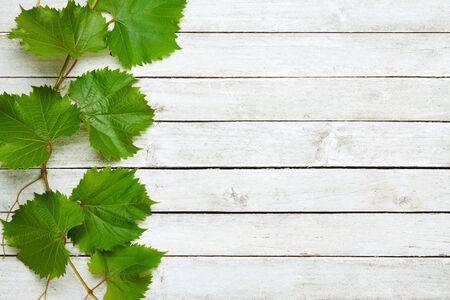 Hojas de vid en un fondo de madera blanco