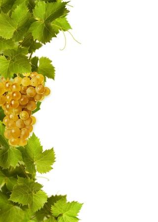 Collage de hojas de vid y uvas amarillas sobre fondo blanco Foto de archivo