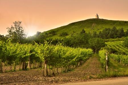 Opini�n de la tarde de los vi�edos en Moravia