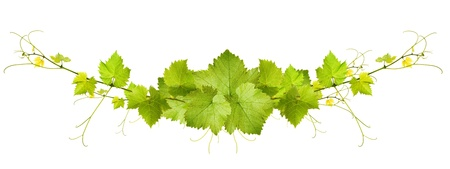 Collage di foglie di vite su sfondo bianco Archivio Fotografico - 21419310