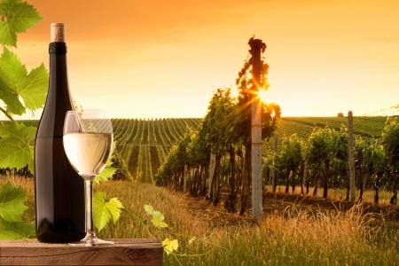 Soir�e vue sur les vignes au coucher du soleil Banque d'images