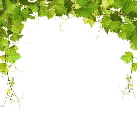 白い背景の上葉つるのコラージュ 写真素材