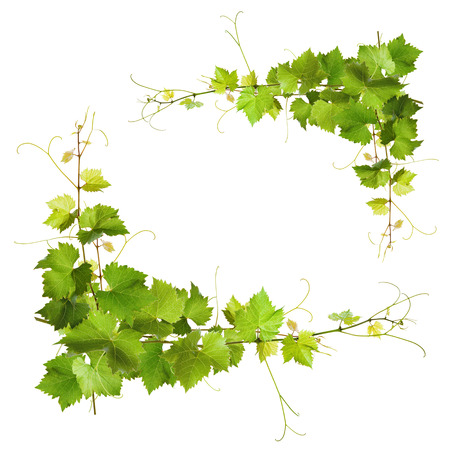 Collage of vine leaves on white background photo