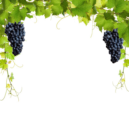 grape leaf: Collage of vine leaves and blue grapes on white background Stock Photo