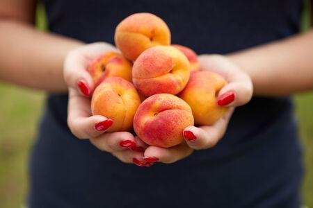 Mains des femmes d�tenant les abricots dans le jardin Banque d'images